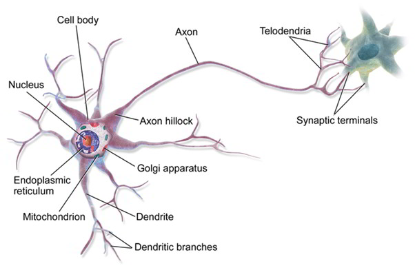Motor Neuron Disease and Its Symptoms, Causes, And Treatment