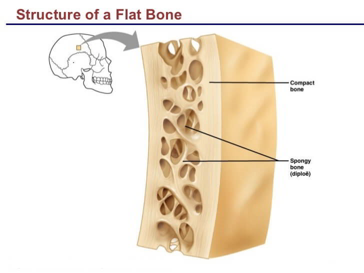 lecture-bone-structure-markings-19-728