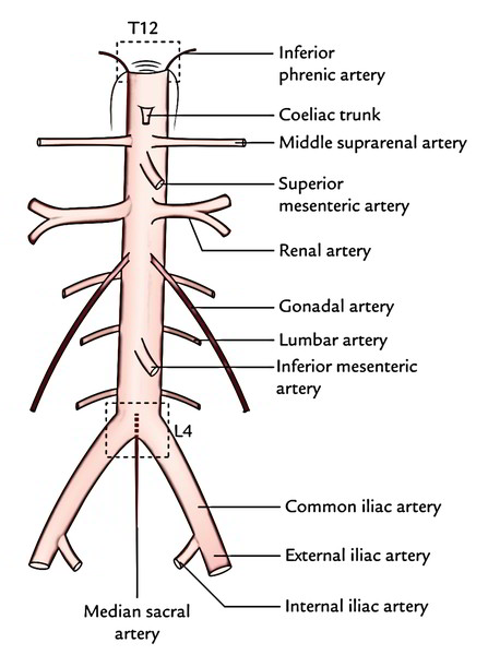 4: The Abdomen, Pelvis, and Perineum | Pocket Dentistry