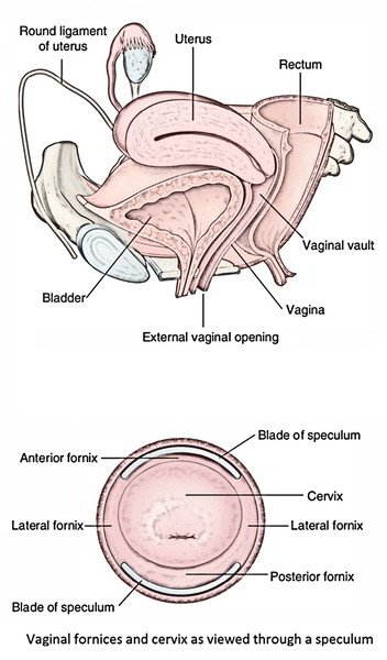 Easy Notes On 【Vagina】Learn in Just 4 Minutes!
