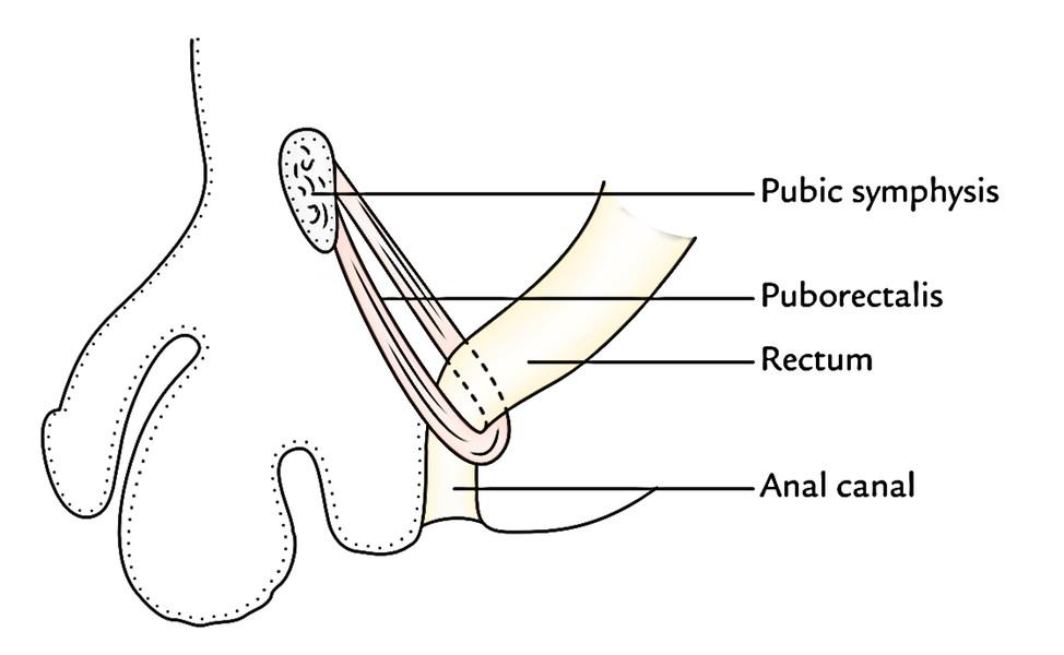 Rectum: Anteroposterior Curvatures
