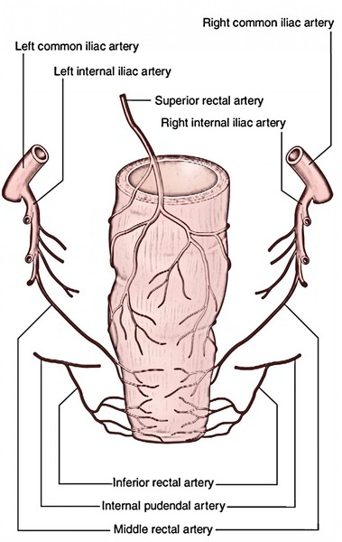 Anal Canal: Arterial Supply