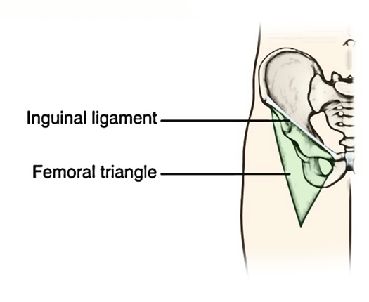 Femoral Canal Anatomy - Femoral Triangle The Most Impressive Project ...