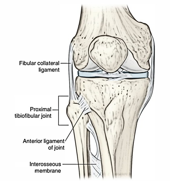 Easy Notes On 【Tibiofibular Joints】Learn in Just 4 Minutes!