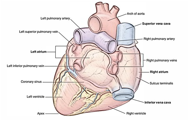 Easy Notes On Heartlearn In Just 4 Minutes