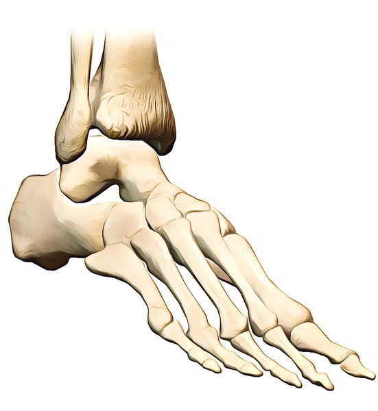 Easy Notes On Tarsal Boneslearn In Just 4 Minutes