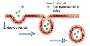 Vesicular Transport – Endocytosis and Exocytosis – Earth's Lab
