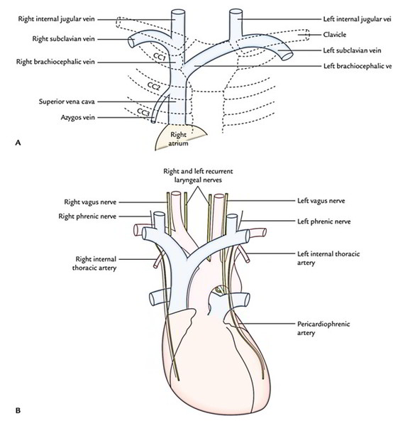easy notes on  u3010superior vena cava u3011learn in just 3 minutes