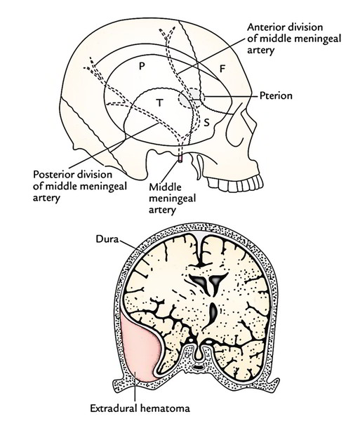 Clinical Significance of Skull