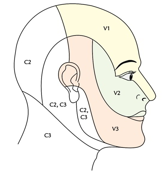 Easy Notes On 【Face Anatomy】Learn in Just 4 Minutes!