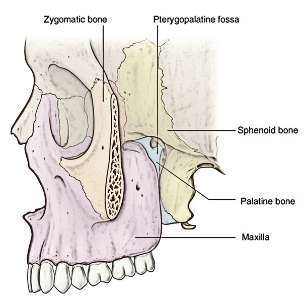 Easy Notes On 【Pterygopalatine Fossa】Learn in Just 3 Minutes!