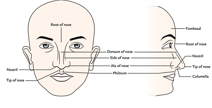 Easy Notes On 【Nose】Learn in Just 4 Minutes! – Earth's Lab