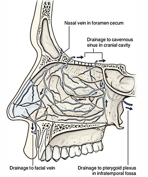 Nasal Cavity: Venous Drainage