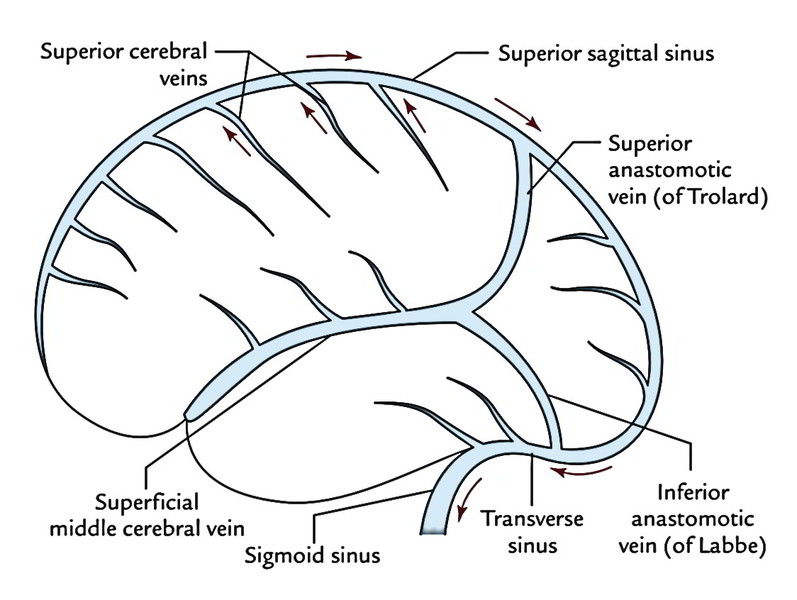 Easy Notes On 【Venous Drainage of the Brain】Learn in Just 3 Mins!