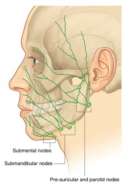 Easy Notes On 【Lymphatic Drainage of the Face】Learn in Just 3 Mins!