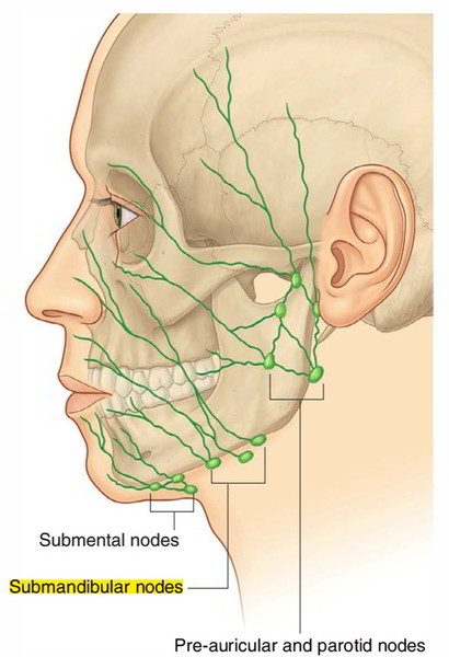 Easy Notes On 【Submandibular Lymph Nodes】Learn in Just 3 Mins!