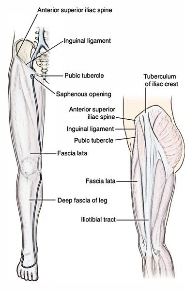 Easy Notes On 【Deep Fascia of Thigh – Fascia Lata】
