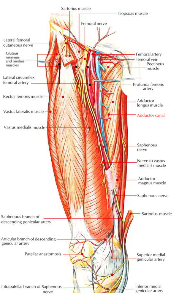 Easy Notes On Adductor Canalsubsartorial Or Hunters Canal