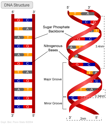 DNA Structure and Function – Earth's Lab