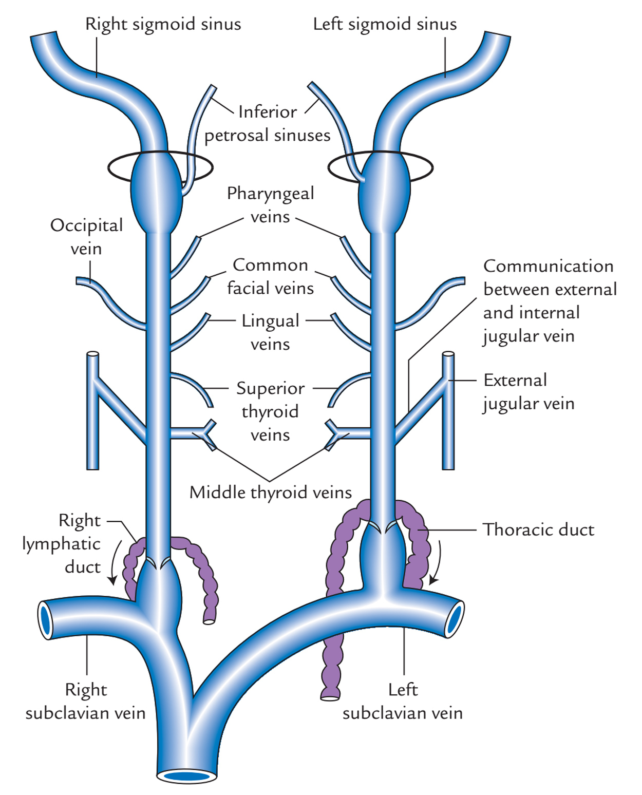 Internal Jugular Vein: Tributaries