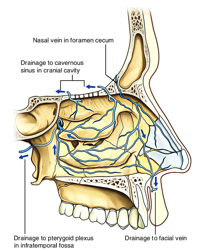 Nasal Cavity: Venous Drainage of Nasal Cavity