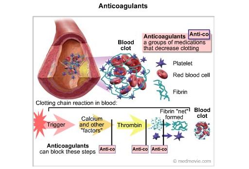 Fibrinolysis And Anticoagulants Earth S Lab