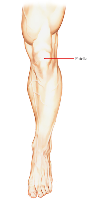 Easy Notes On 【Patella (Knee Cap)】Learn in Just 3 Minutes!