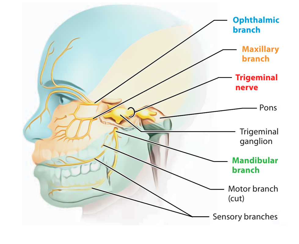 Easy Notes On 【Cranial Nerves】Learn in Just 4 Minutes!