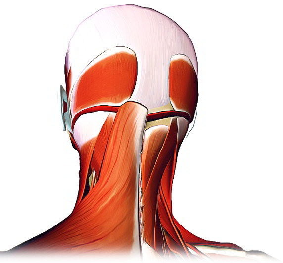 Easy Notes On 【Muscles of Head and Neck】Learn in Just 3 Minutes!