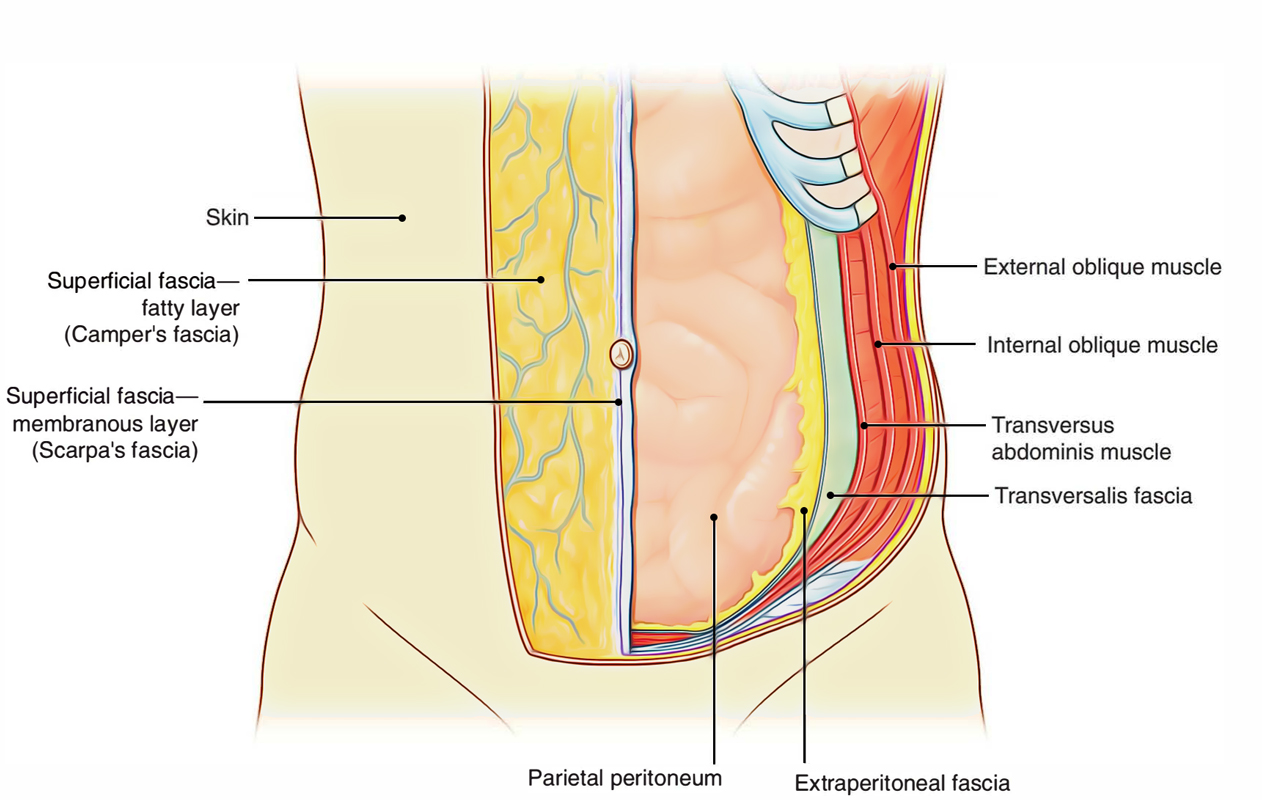 Easy Notes On 【Peritoneum】Learn in Just 4 Minutes!