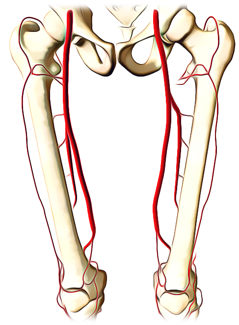 Easy Notes On Femoral Arterylearn In Just 4 Minutes
