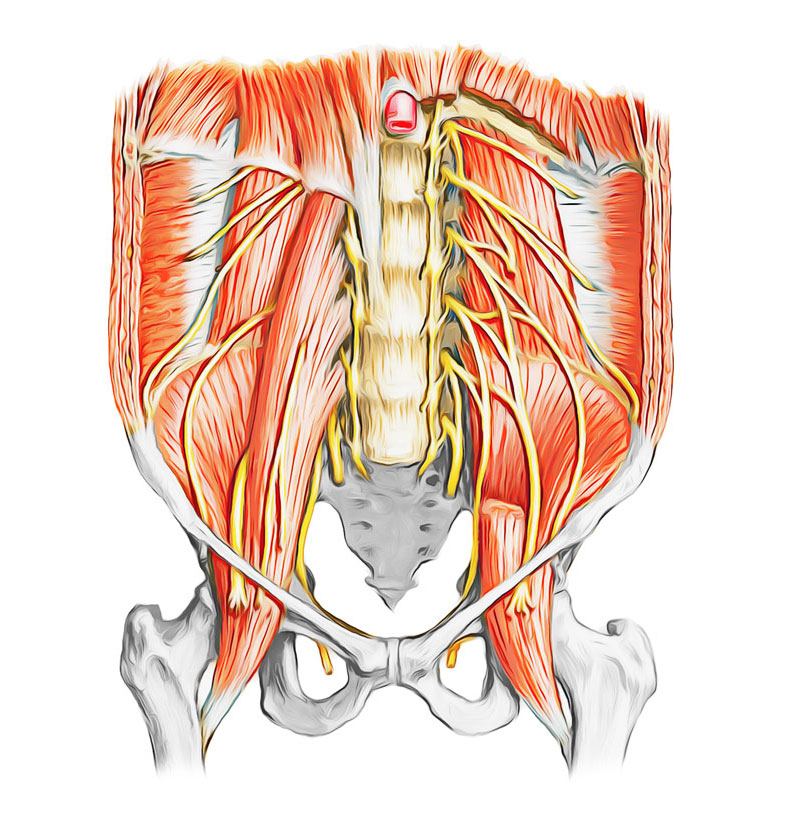Easy Notes On 【Nerves of the Abdomen】Learn in Just 4 Minutes!