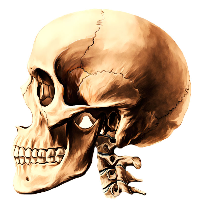Easy Notes On 【Frontal Bone】Learn in Just 4 Minutes!