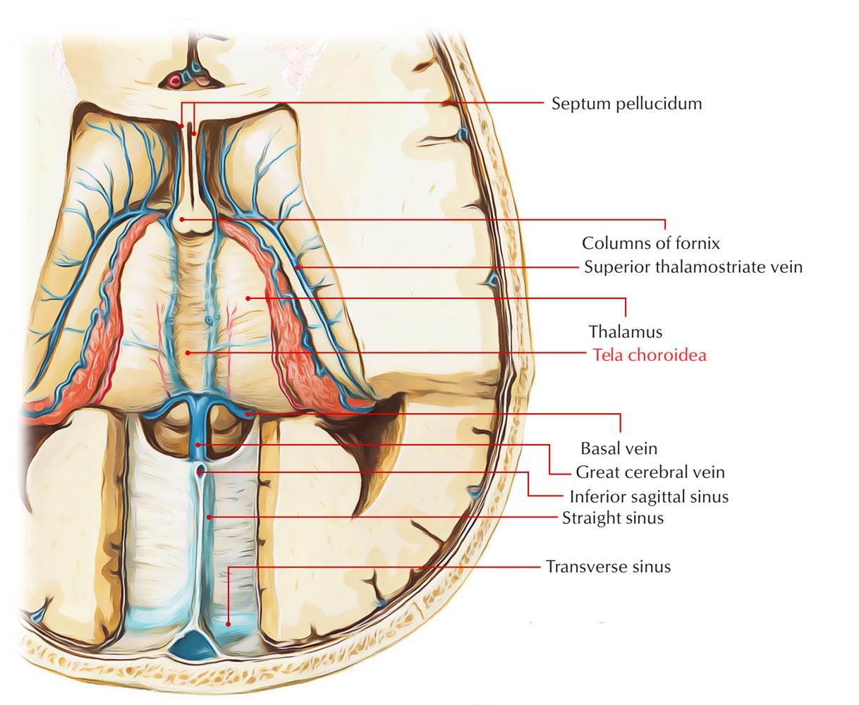 Tela Choroidea