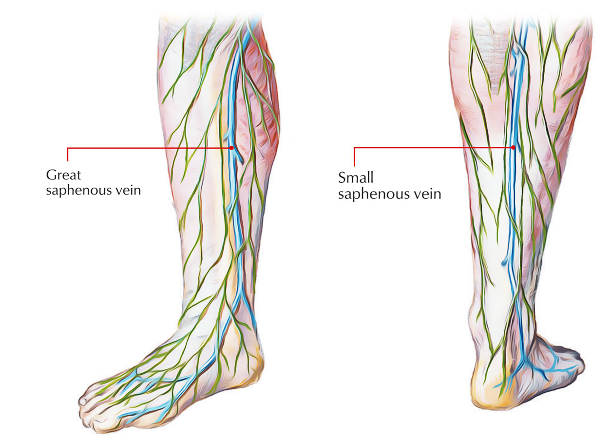 Veins of foot