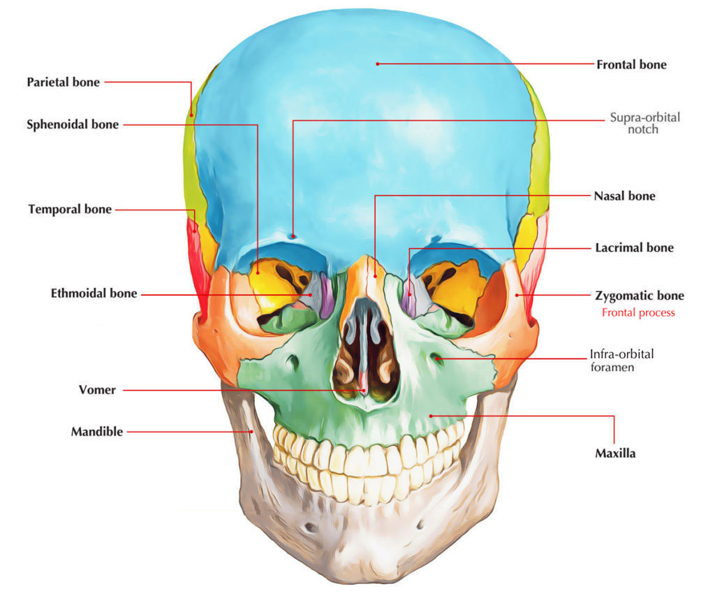 Frontal Process of Zygomatic bone