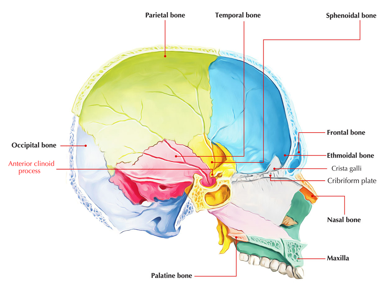 Anterior Clinoid Process