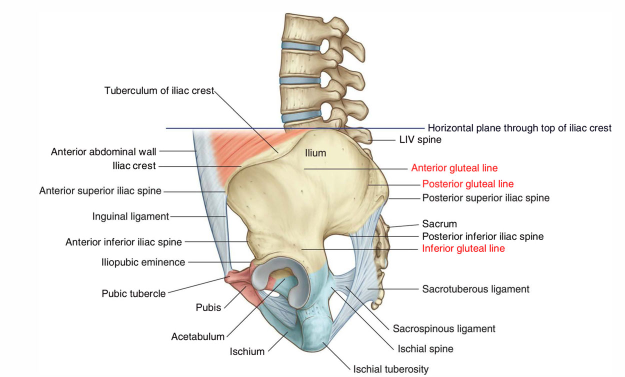 Iliac Spine Surfaces