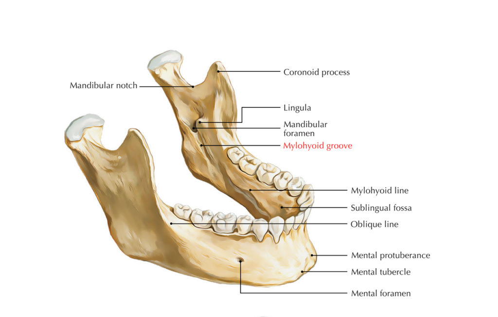 Submandibular Fossa
