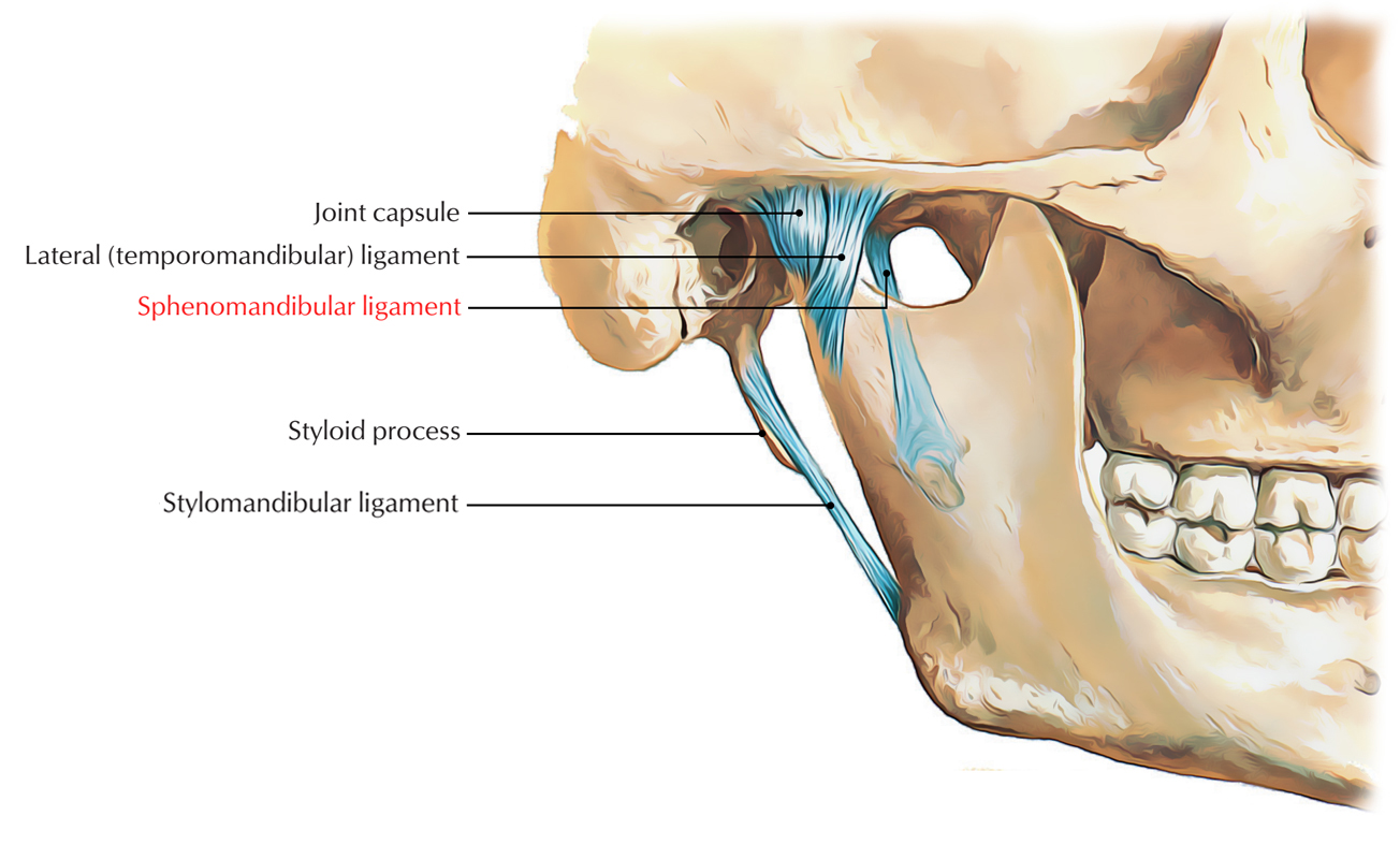 Sphenomandibular Ligament