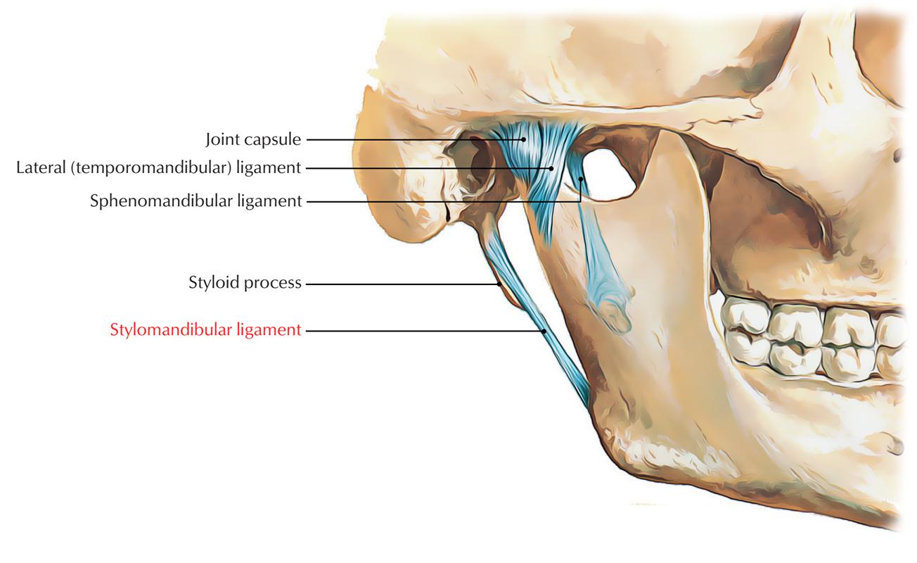 Stylomandibular Ligament