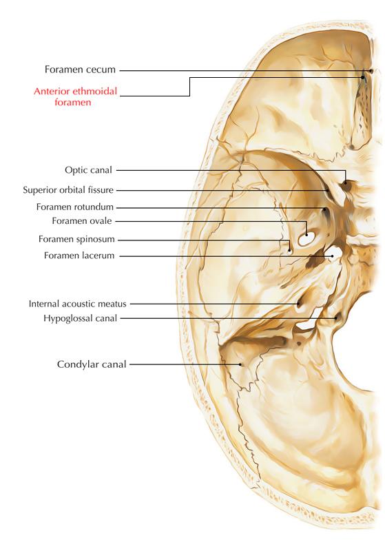 Anterior Ethmoidal Foramen