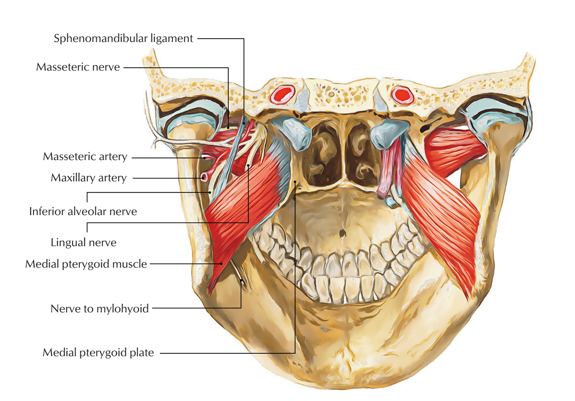 Origin of Inferior Alveolar Nerve