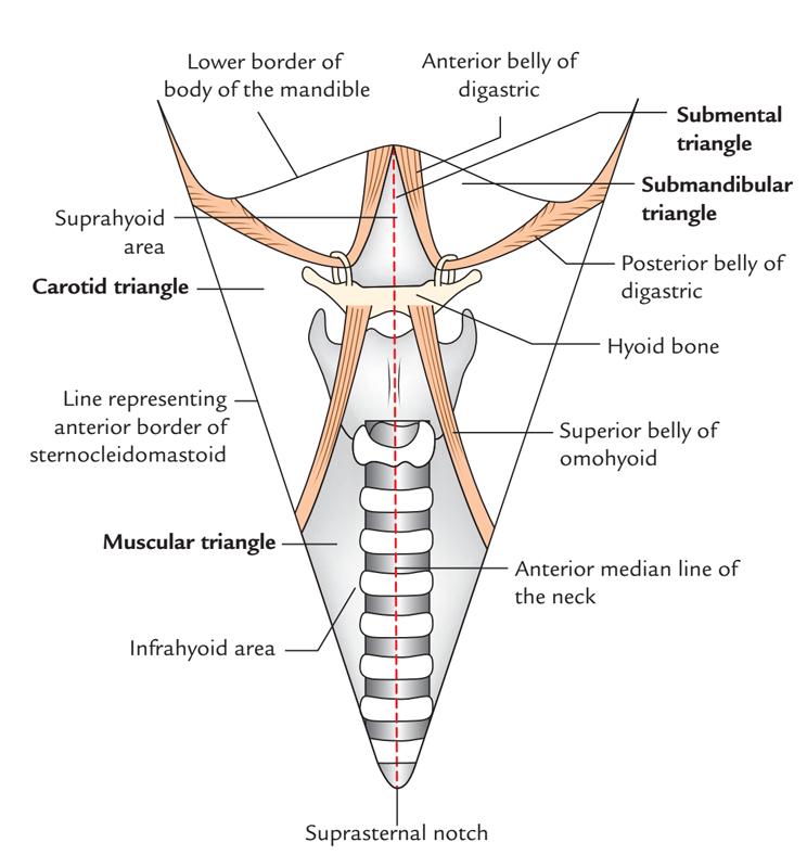 Digastric or Submandibular Triangle
