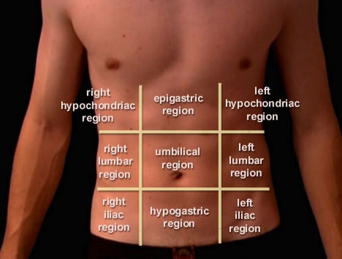 Abdominopelvic Quadrants And Regions